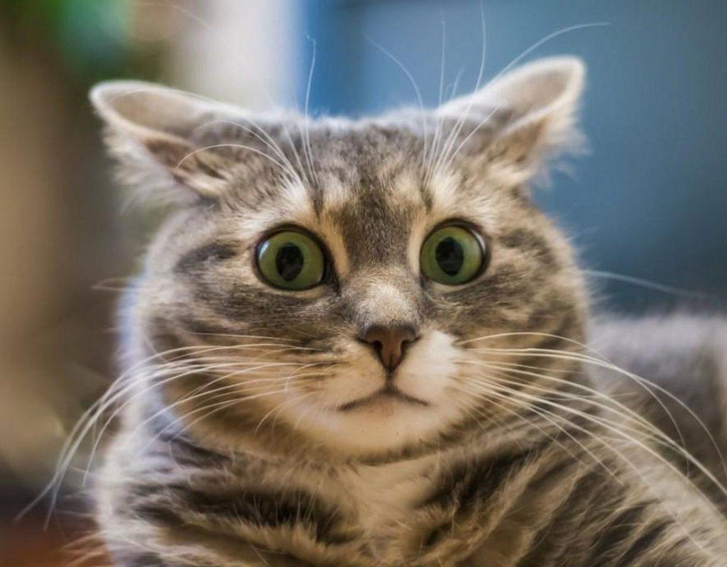 Ребенок съел кошачий корм. Насколько все плохо??